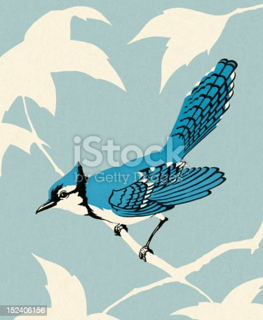 Blue Jay Bird Sitting on Branch