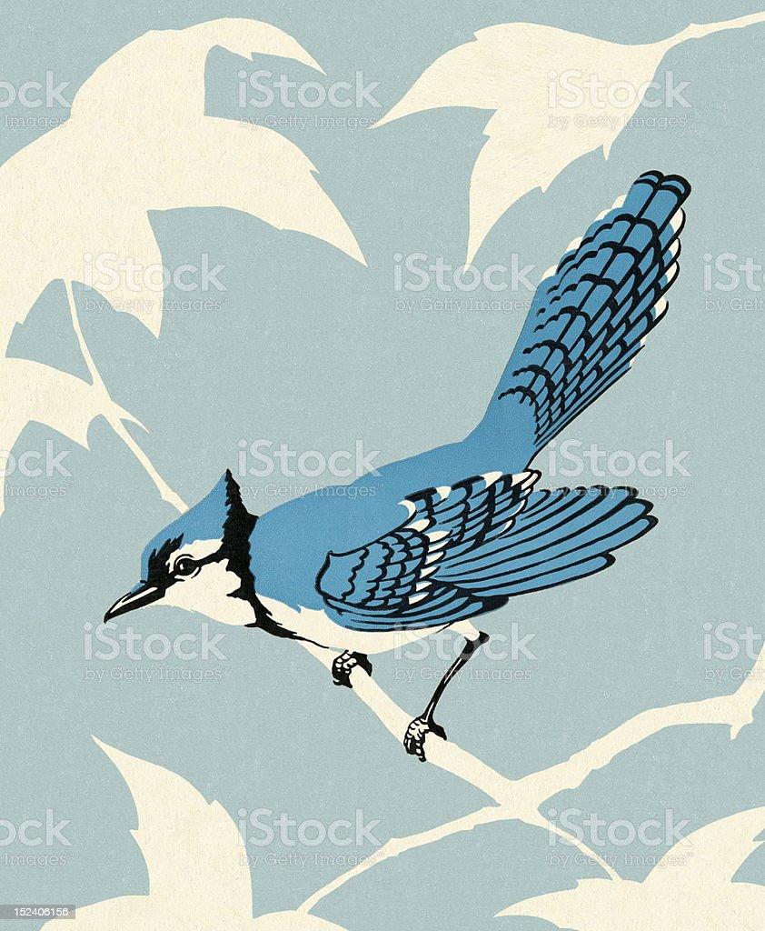 Blue Jay Bird Sitting on Branch vector art illustration
