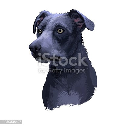 istock Blue Lacy, Lacy Cur dog, Lacy Hog Dog, state dog of Texas digital art illustration isolated on white background. American origin working dog. Cute pet hand drawn portrait. Graphic clip art design. 1250308407