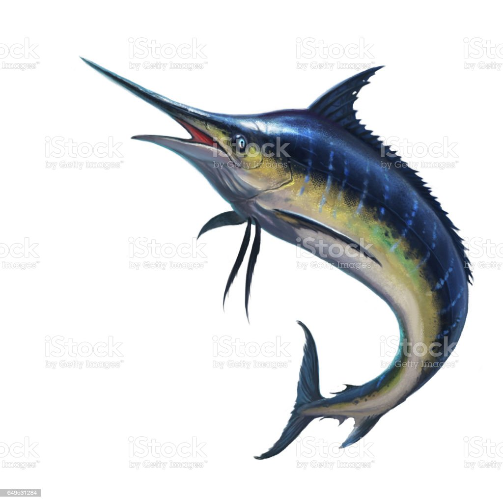 Blue marlin vector art illustration