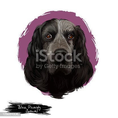 istock Blue Picardy Spaniel, Epagneul Bleu de Picardie, Bleu Picard dog digital art illustration isolated on white background. French origin gun dog. Cute pet hand drawn portrait. Graphic clip art design 1250310062