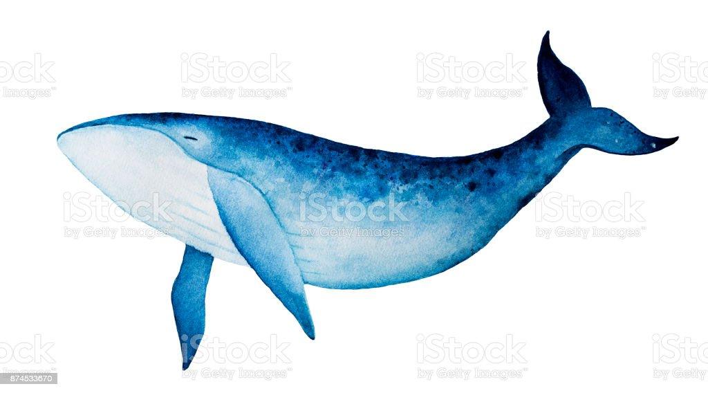 Ilustración de Ballena Azul Ilustración Acuarela Espíritu Animal ...