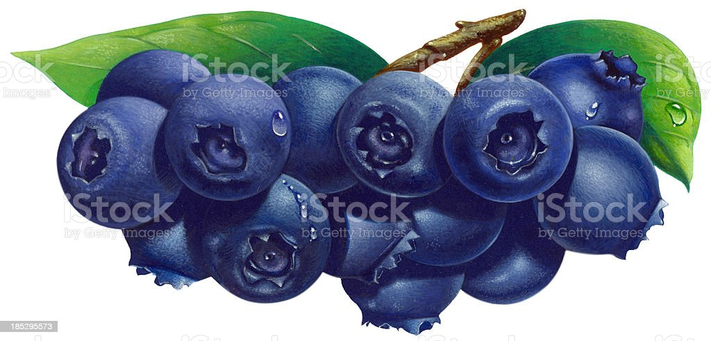Blueberries vector art illustration
