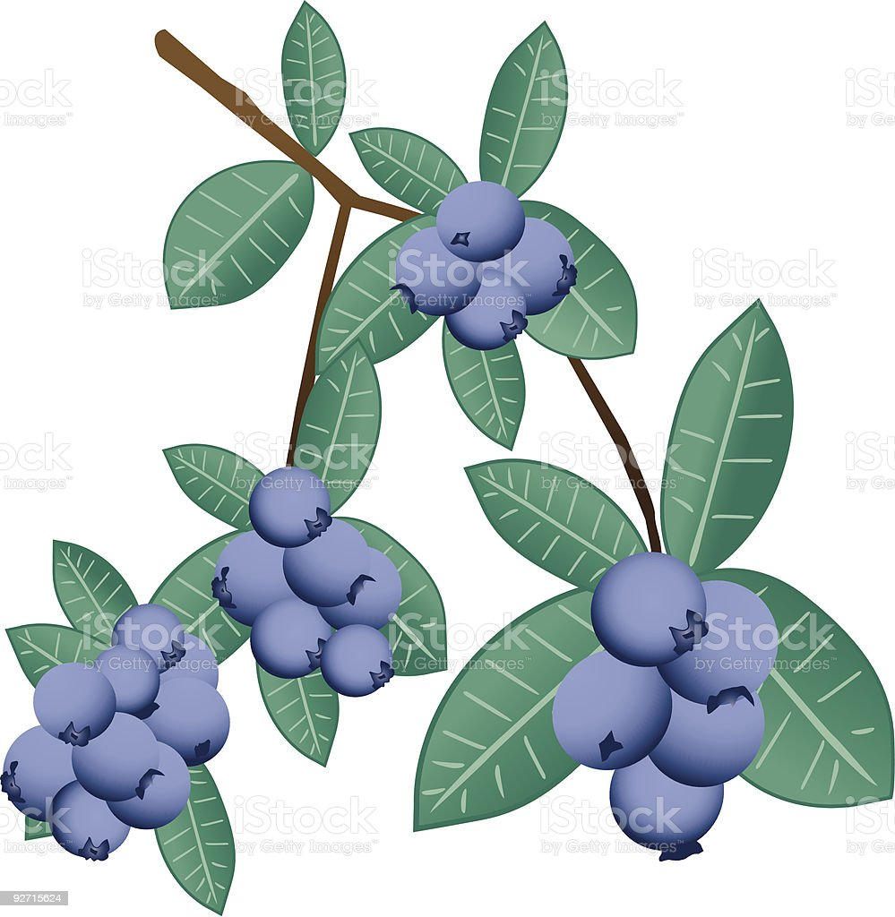 Blueberries royalty-free blueberries stock vector art & more images of adult offspring