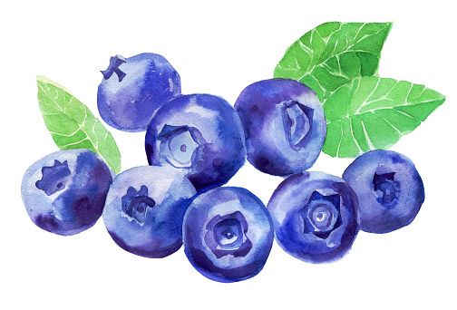 Blueberries watercolor isolated. Many painted berries.