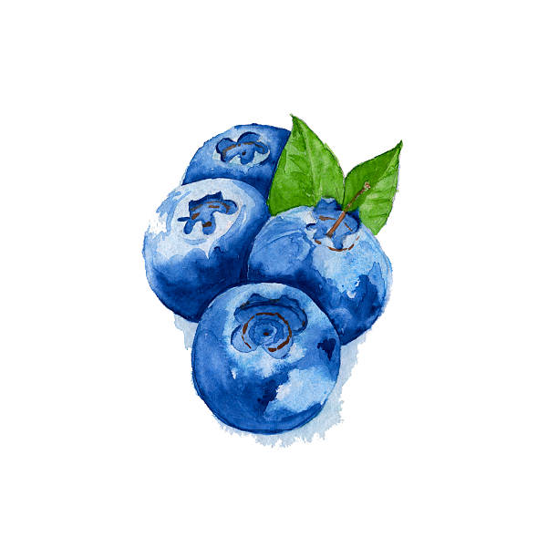 blueberries with leaves isolated. Watercolor vector art illustration