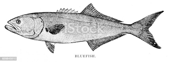 Annual Report of the Forest, Fish and Game Commission New York 1898