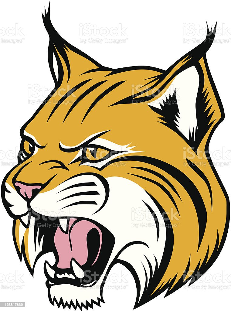 royalty free bobcat clip art vector images illustrations istock rh istockphoto com free bobcat clipart black and white