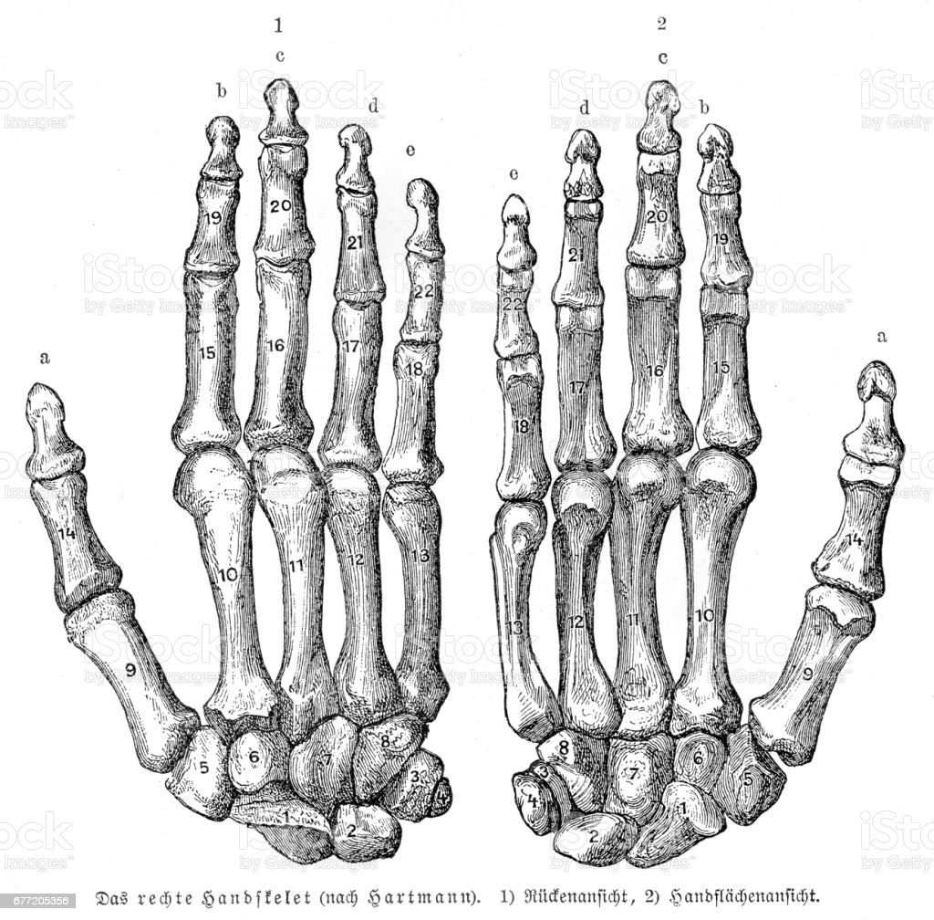 Bones Hands Anatomy Engraving 1857 Stock Vector Art & More Images of ...