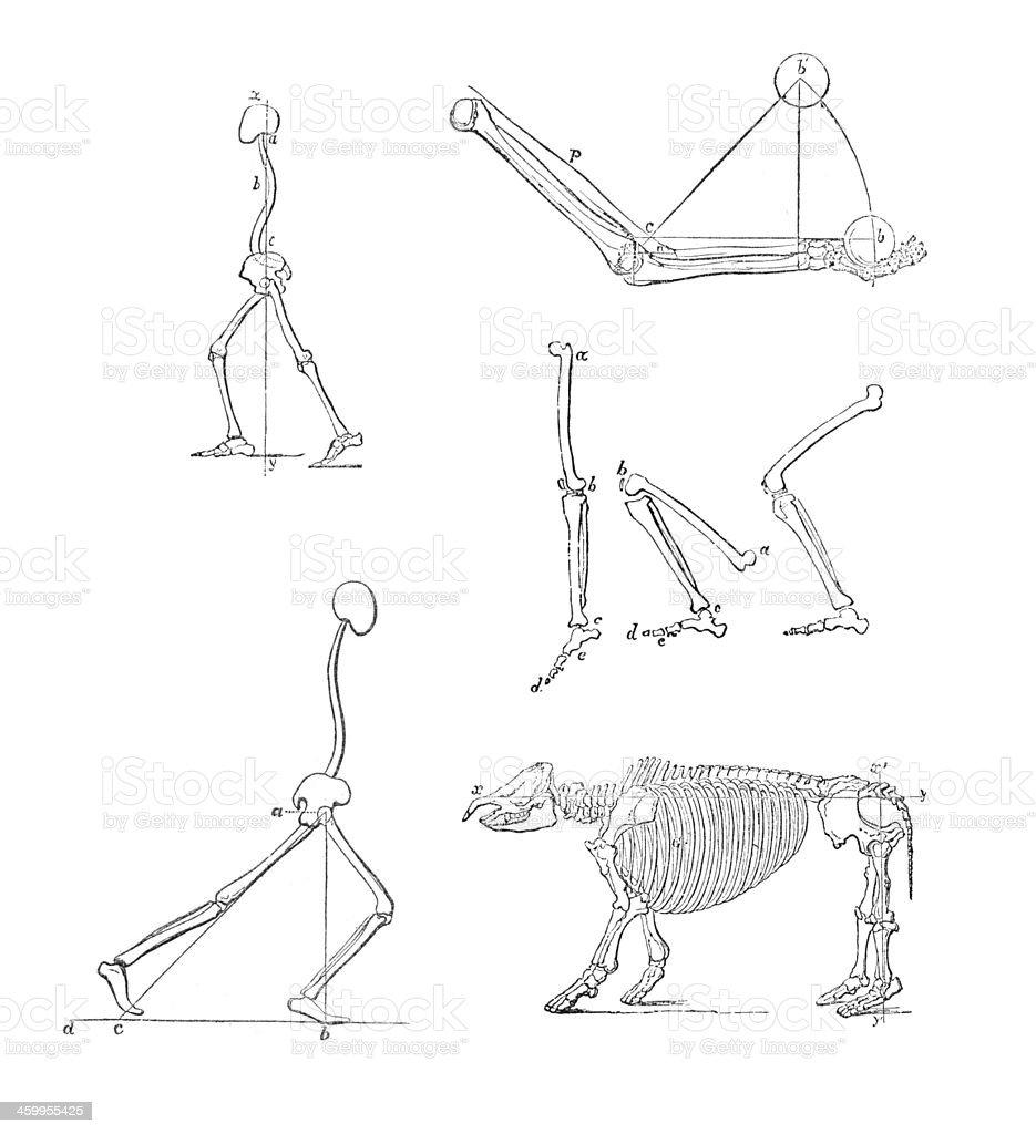 Ilustración de Los Huesos y más banco de imágenes de Anticuado ...