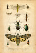 Book plate : Insect and butterfly