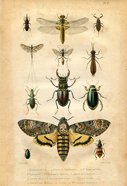 book plate : insect and butterfly - bugs stock illustrations, clip art, cartoons, & icons