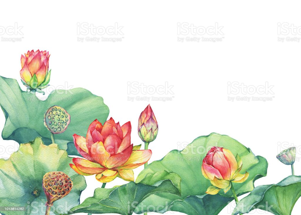 Border frame of pink lotus flower with leaves seed head bud border frame of pink lotus flower with leaves seed head bud water mightylinksfo
