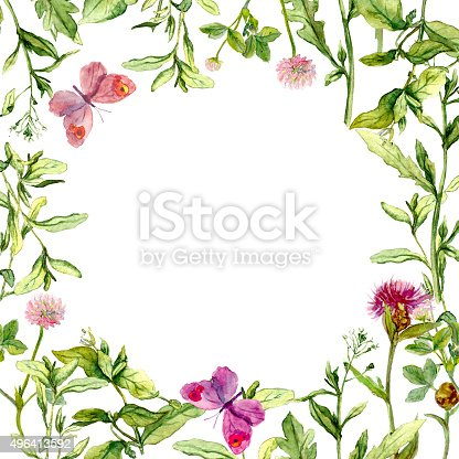 Border Frame With Wild Herbs Meadow Flowers And