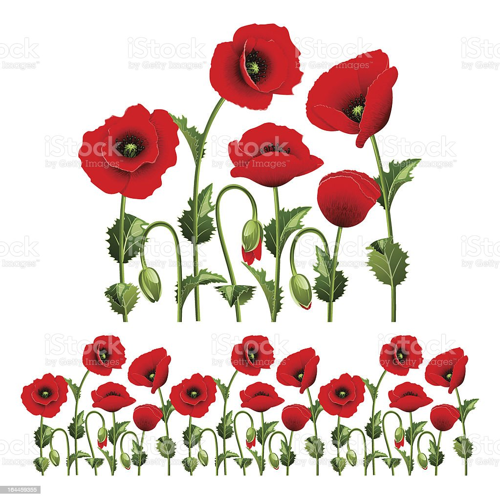 Border from poppies. royalty-free stock vector art