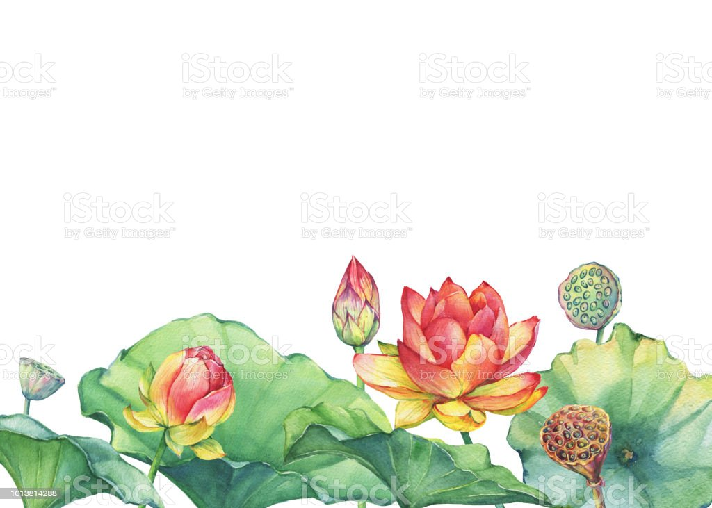 Border Poster Of Pink Lotus Flower With Leaves Seed Head Bud
