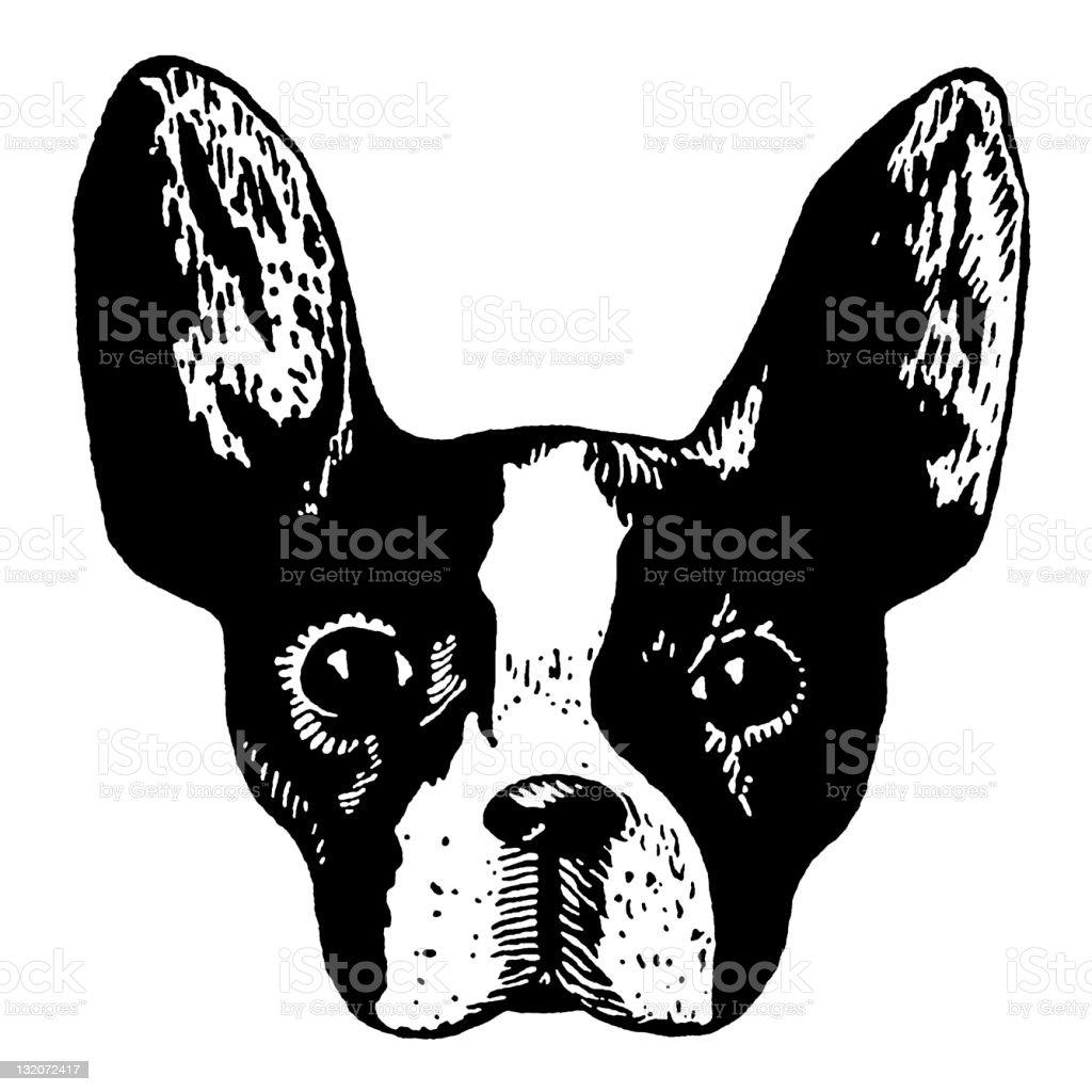 Boston Terrier Head vector art illustration