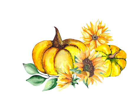 A botanical holiday drawing with a yellow pumpkin, a sunflower and green leaves on a white background. A watercolor composition for decorating postcards and illustrations for Thanksgiving.