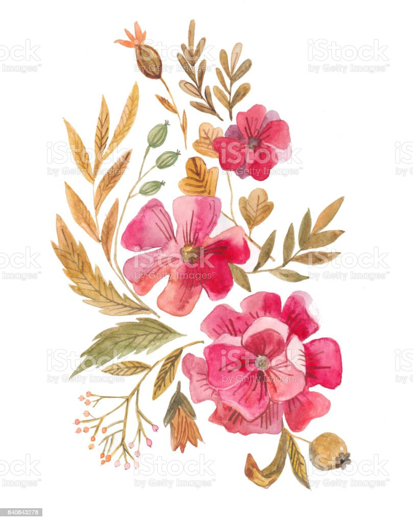 Botanical Illustration Watercolor Composition Of Plants And Flowers