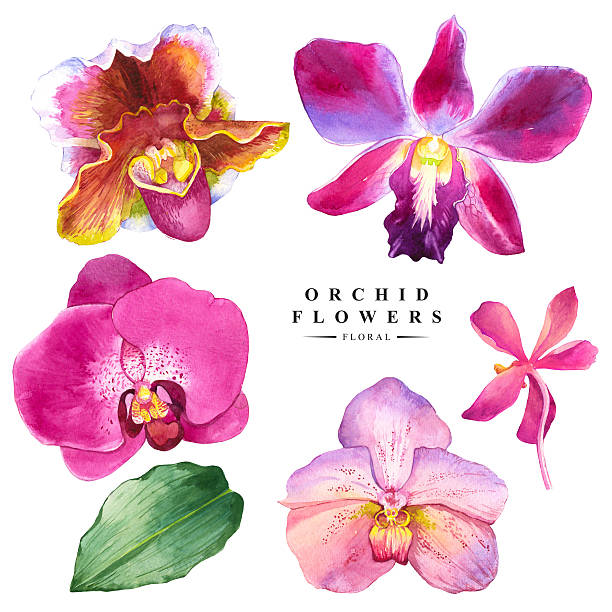 Botanical illustration with realistic tropical flowers and leaves. Watercolor collection of orchid flowers. Handmade painting on a white background. Spa style. Violet flowers. orchid stock illustrations