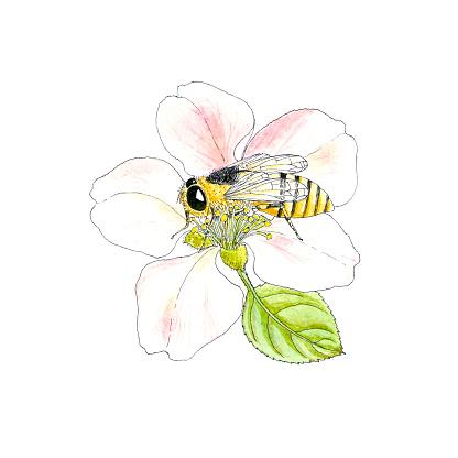 Botanical Plant & Bee.