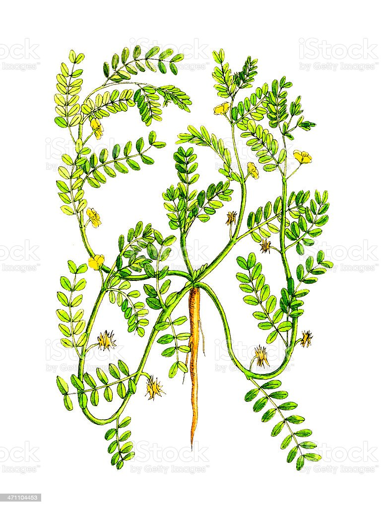 Botanical Plant. royalty-free botanical plant stock vector art & more images of agriculture