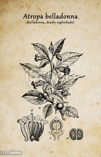 istock Botany plants antique engraving illustration: Atropa belladonna (belladonna or deadly nightshade) 1177465885