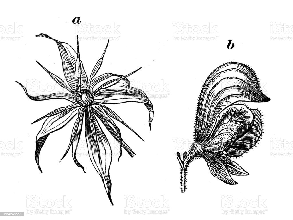 Botany Plants Antique Engraving Illustration Different Types Of