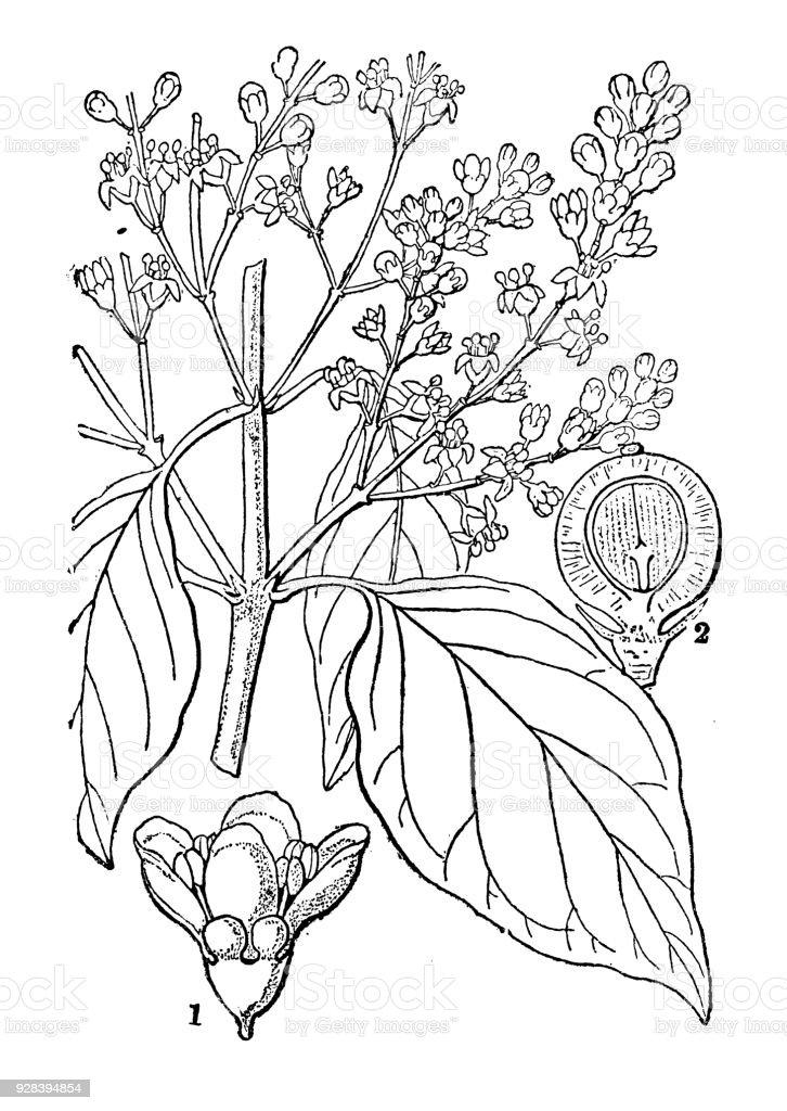 royalty free mustard tree clip art  vector images  u0026 illustrations