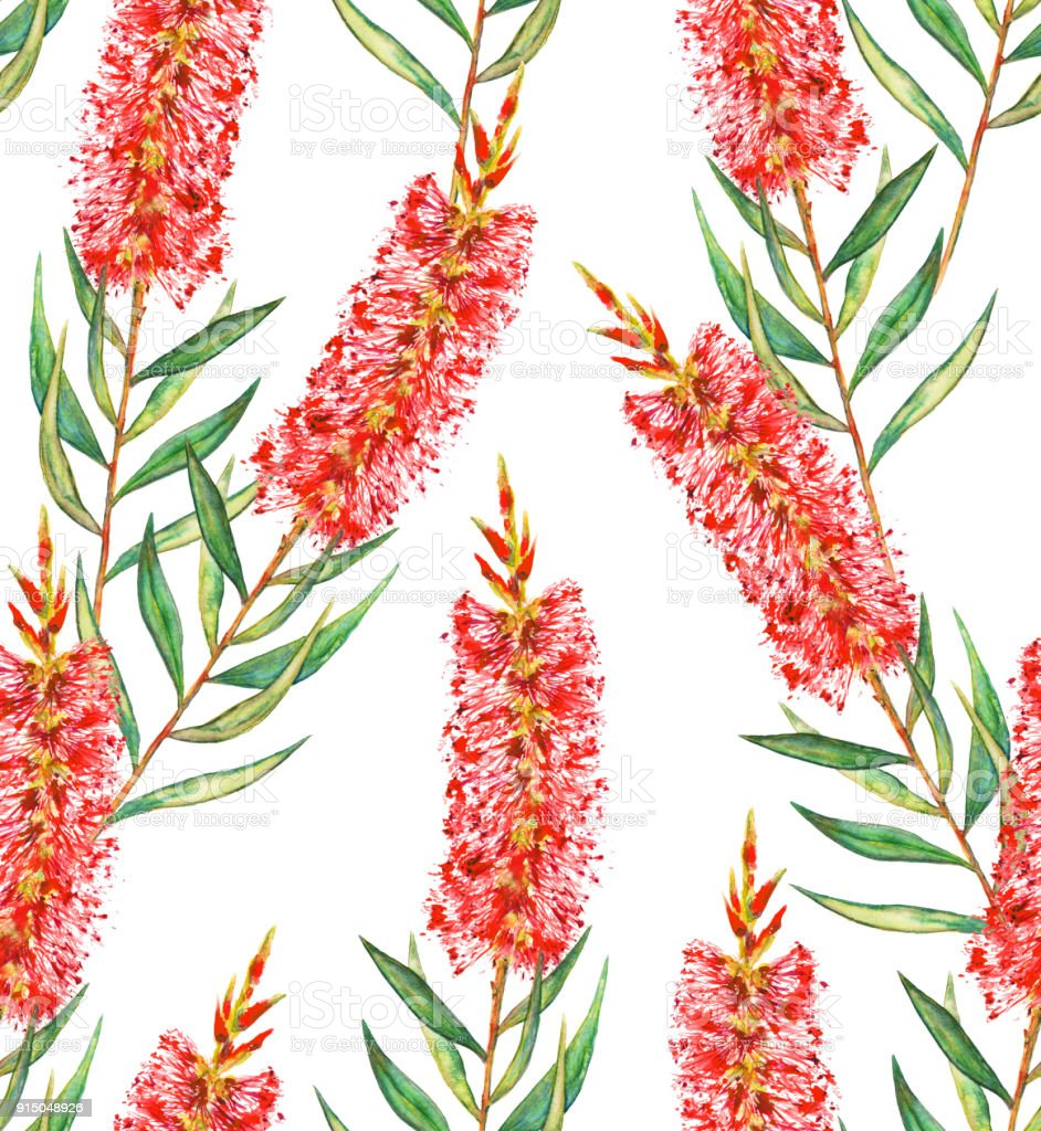 Bottlebrush Flower Background Seamless Pattern Stock