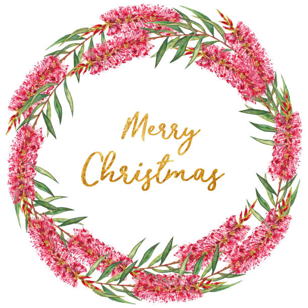 Bottlebrush flower wreath with Merry Christmas text Festive Christmas floral wreath with hand painted watercolor Bottlebrush flowers. Red and green colored design with gold glitter Merry Christmas text. australian christmas stock illustrations
