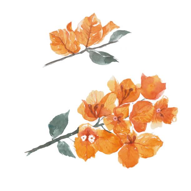 Flor de buganvilla. - ilustración de arte vectorial