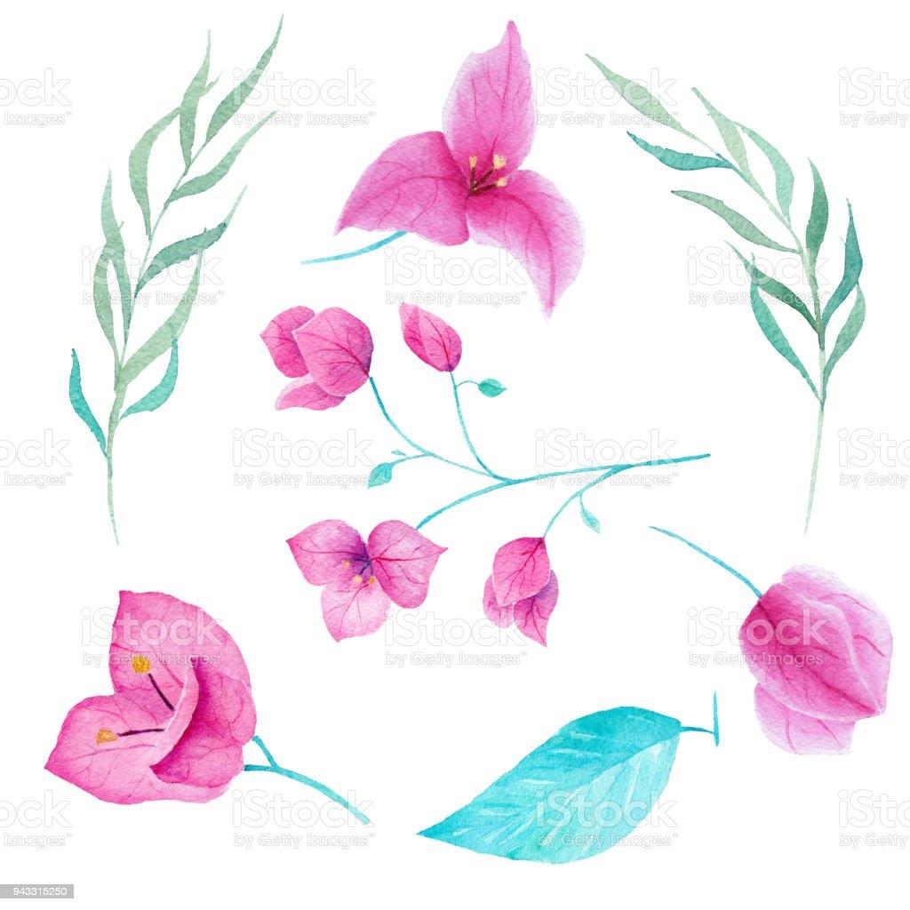 Beyaz arka plan üzerinde Bouganvillea çiçek suluboya koleksiyon. Kullanılabilir kart, Dekorasyon, davet, yazdırma için. vektör sanat illüstrasyonu