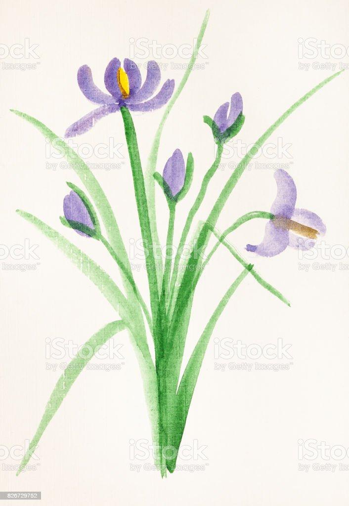 bouquet from fresh iris flowers vector art illustration