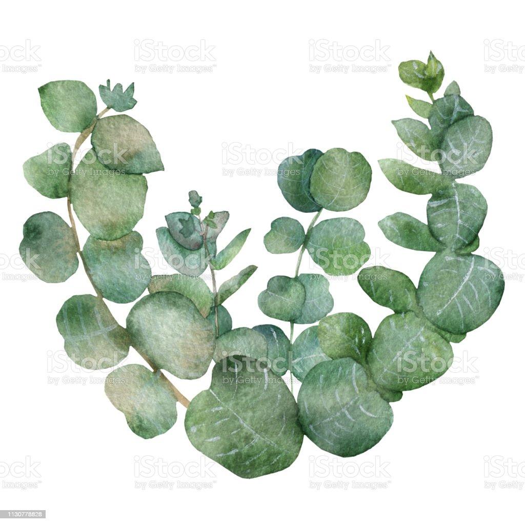 Feuille D Eucalyptus Bouquet bouquet deucalyptus sur un fond blanc branches daquarelle et