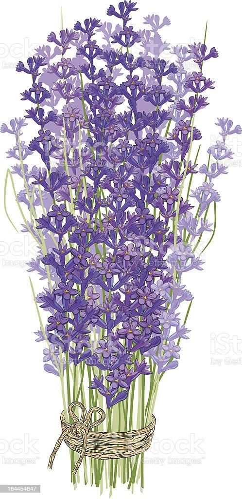 Bouquet of lavender vector art illustration
