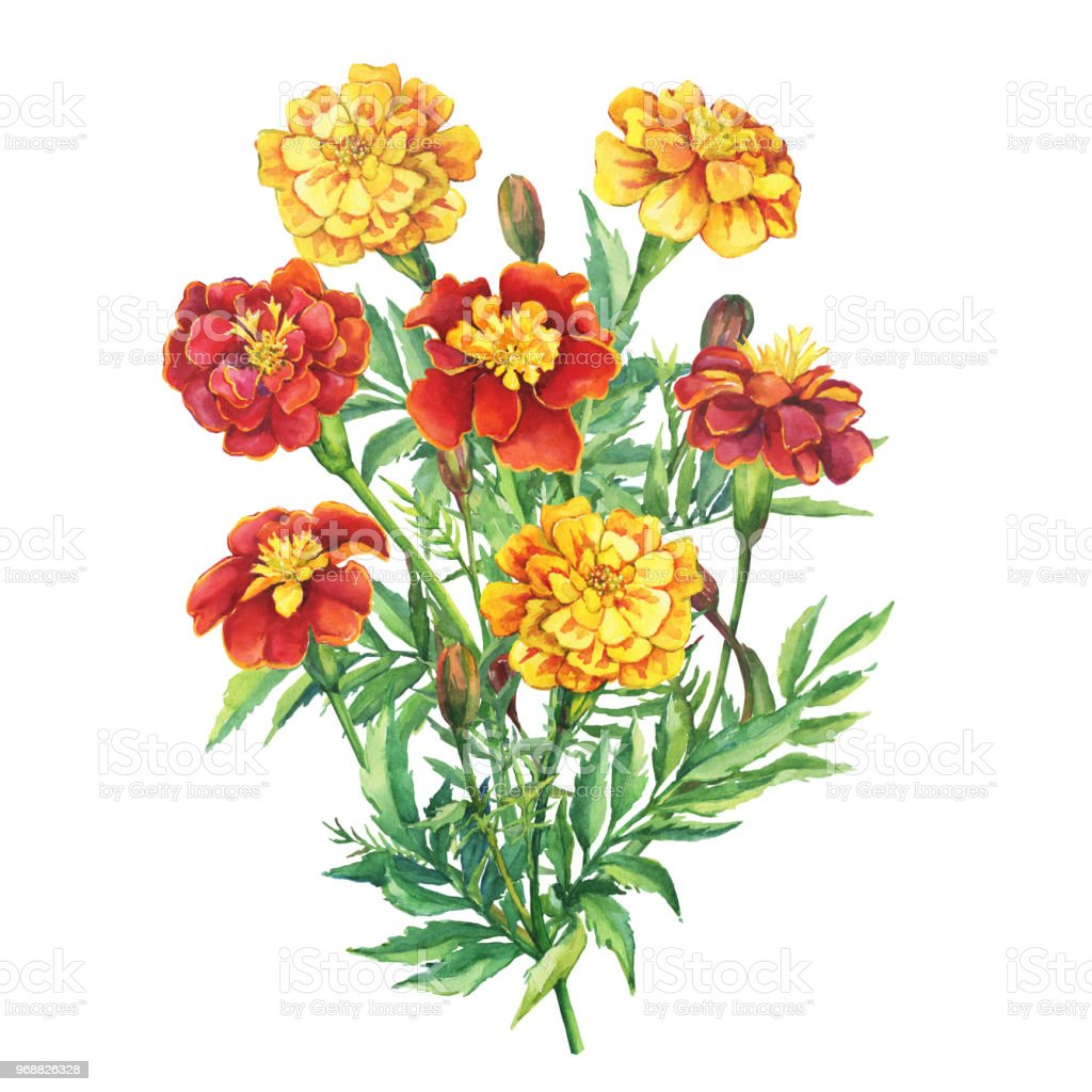 Bouquet Of Red Yellow Flowers Tagetes Patula The French Marigold