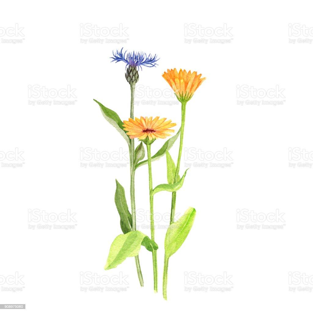 Blumenstrauß Aquarell Zeichnung Stock Vektor Art Und Mehr Bilder Von