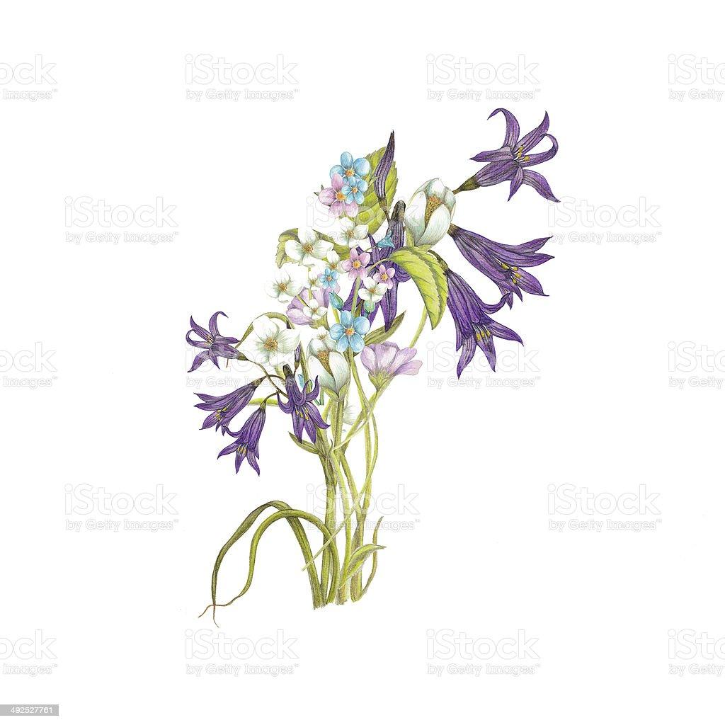 Bouquet de fleurs sauvages cliparts vectoriels et plus d 39 images de aquarelle 492527761 istock - Bouquet de fleurs sauvages ...