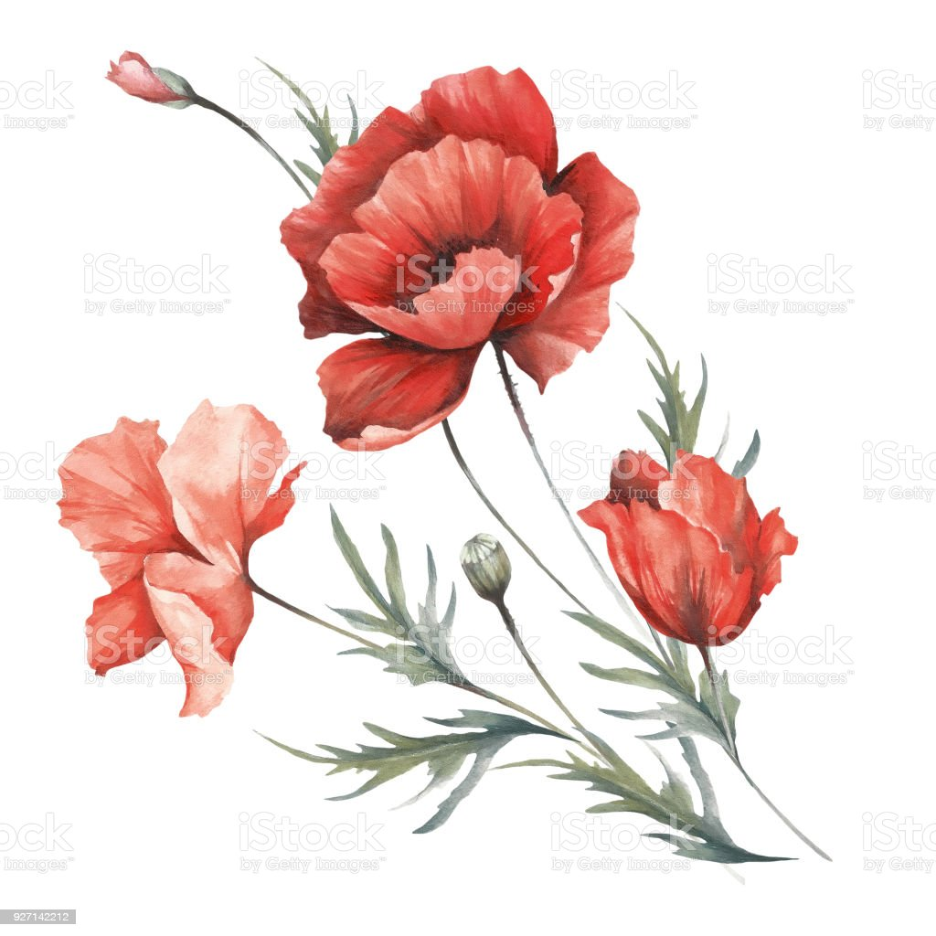 Bouquet With Poppies Hand Draw Watercolor Illustration Stock Vector