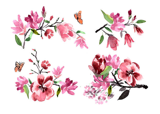 Bouquets of flowers magnolia watercolor painted vector art illustration
