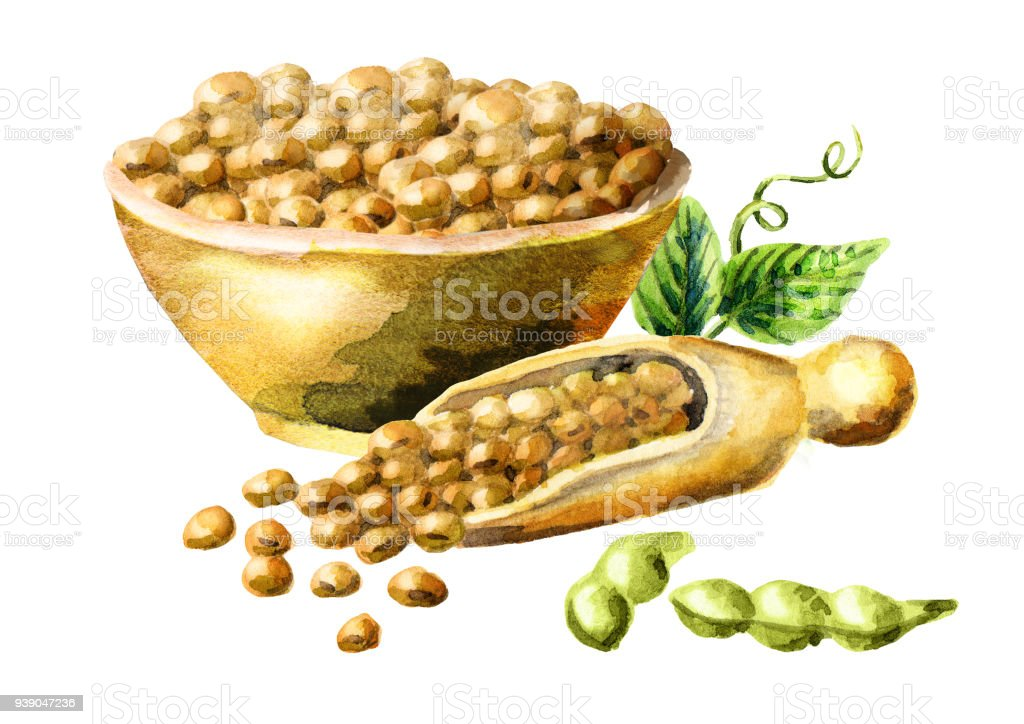 Bowl and scoop with soybeans. Watercolor hand-drawn illustration vector art illustration