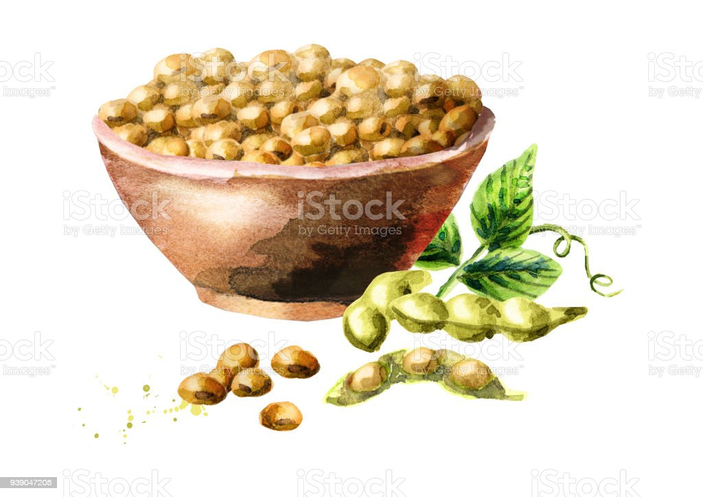 Bowl with soybeans. Watercolor hand-drawn illustration vector art illustration