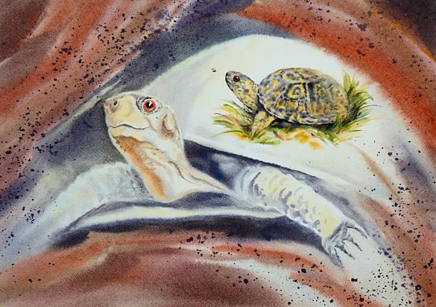 Box Turtle Spirit vector art illustration