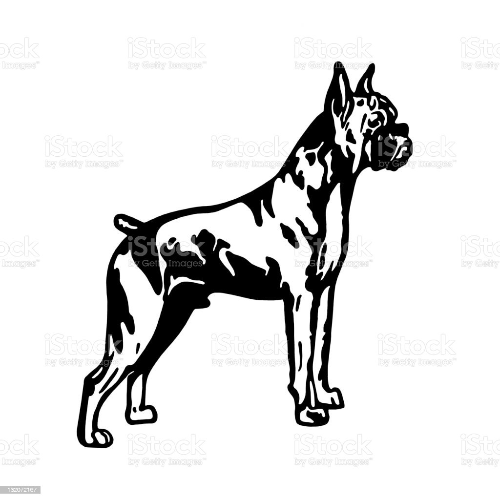 Boxer Dog Stock Vector Art & More Images of Best in Show 132072167 ...
