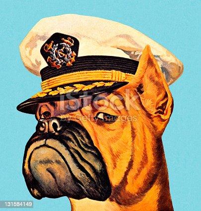 Boxer Dog Wearing Captian Hat