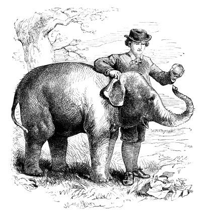 Boy feeding a baby elephant