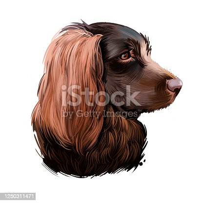 istock Boykin Spaniel dog breed isolated on white background digital art illustration. Medium-sized breed of dog, a Spaniel bred for hunting, English Cocker Spaniel head profile portrait with text. 1250311471