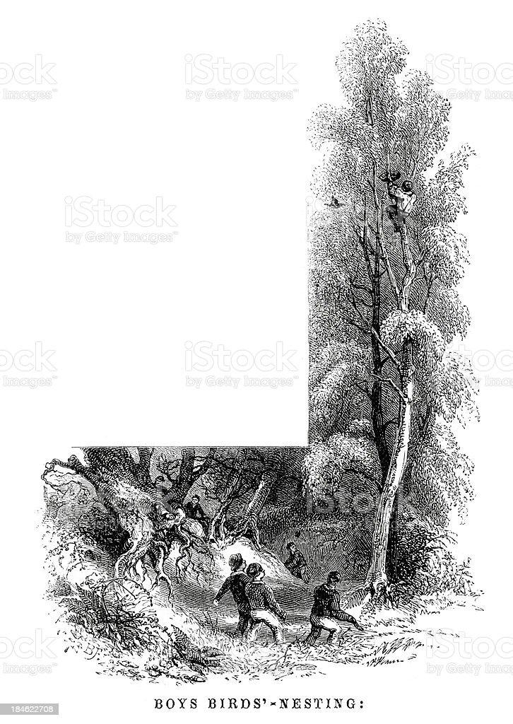Boys Bird Nesting royalty-free boys bird nesting stock vector art & more images of 19th century