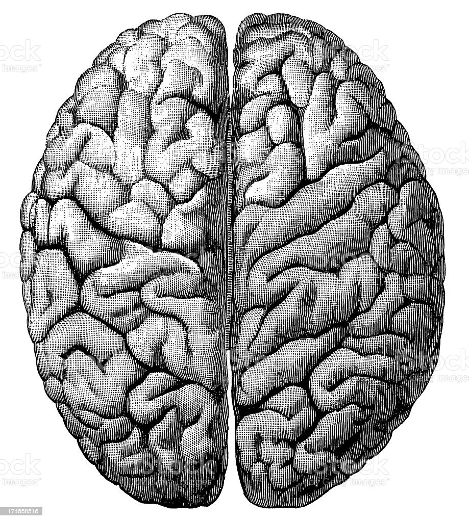 Brain (Isolated on White) vector art illustration